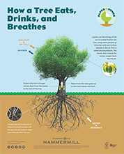 Paper is Power - How a Tree Eats, Drinks and Breathes