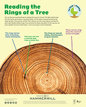Paper is Power - Reading the Rings of a Tree